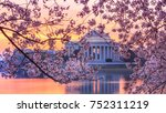 Cherry Blossoms On Trees Aroun...
