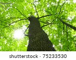 tree | Shutterstock . vector #75233530