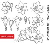 vector set with outline freesia ... | Shutterstock .eps vector #752425381