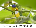 gouldian finch   the lady... | Shutterstock . vector #752434147