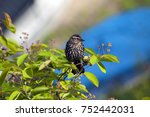 female redwing bird