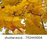 autmn yelow leaves | Shutterstock . vector #752445004