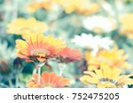 flower gazania close up against ... | Shutterstock . vector #752475205
