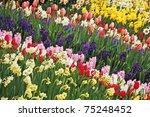 Garden Full Of Tulips Daffodil...