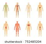 human anatomy. set of ... | Shutterstock . vector #752485204