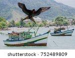 magnificent frigatebird soaring   Shutterstock . vector #752489809
