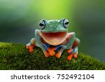 Stock photo tree frog flying frog laughing animal closeup 752492104