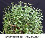 Jade Plant  Referred To As The...