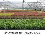 the young plants growing in a...   Shutterstock . vector #752504731
