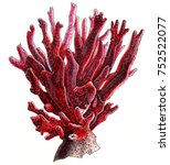 hand drawing markers ocean sea... | Shutterstock . vector #752522077