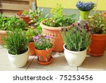 Small Herb And Flower Garden...