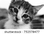 Stock photo kitten portait black and white 752578477