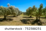 olive farm in provence   france ... | Shutterstock . vector #752588251