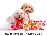 dog in chinese new year festive ... | Shutterstock . vector #752598214