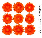 collection of isolated orange... | Shutterstock . vector #75263623