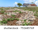 traditional natural way of... | Shutterstock . vector #752685769