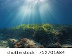 natural sunbeams underwater... | Shutterstock . vector #752701684