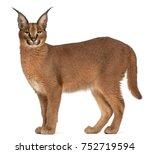 caracal  caracal caracal  6...   Shutterstock . vector #752719594