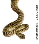 morelia spilota variegata  a...   Shutterstock . vector #752724085