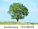 green tree and grass over blue... | Shutterstock . vector #752788999