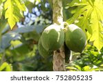 papaya fruit  closed up | Shutterstock . vector #752805235