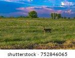 deer in meadow in colorado | Shutterstock . vector #752846065