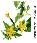 Yellow Cucumber Flowers...