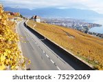 Road Through The Vineyards In...