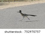 a greater roadrunner  geococcyx ... | Shutterstock . vector #752970757