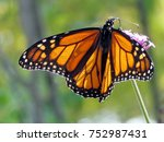 monarch butterfly on the... | Shutterstock . vector #752987431