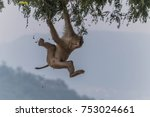 monkey or ape is the common... | Shutterstock . vector #753024661