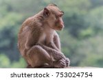 monkey or ape is the common... | Shutterstock . vector #753024754