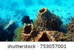 coral reef. diving. underwater...   Shutterstock . vector #753057001