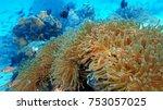 coral reef. diving. underwater... | Shutterstock . vector #753057025