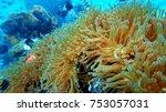 coral reef. diving. underwater... | Shutterstock . vector #753057031
