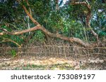 om beach gokarna india jungle... | Shutterstock . vector #753089197