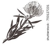 protea flowers  hand drawn in a ... | Shutterstock .eps vector #753127231