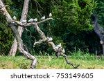 Birds On Broken Branch With...