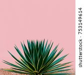 plant on pink. tropical design... | Shutterstock . vector #753149614