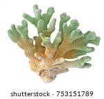 coral isolated on white... | Shutterstock . vector #753151789