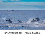 big group of dolphins jumping... | Shutterstock . vector #753156361
