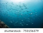 fish shoal underwater on deep... | Shutterstock . vector #753156379