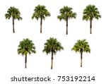 Set Isolated Palm Tree White - Fine Art prints