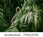 heron perching on leaves | Shutterstock . vector #753212701