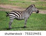 beautiful zebra standing and... | Shutterstock . vector #753219451