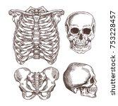 human skeleton engraved set.... | Shutterstock .eps vector #753228457
