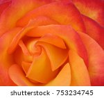 Red Orange Rose