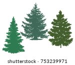 silhouettes of spruce and pine. ... | Shutterstock .eps vector #753239971