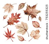 maple leaves with red cherry...   Shutterstock . vector #753255325