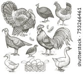 poultry set. birds rooster ... | Shutterstock . vector #753266461